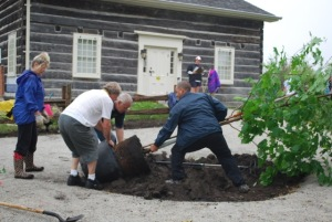 Volunteers installing trees at Leslie Log House